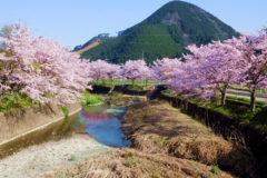 遠阪地区の桜景色