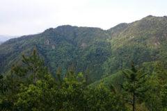 向山(むかいやま):標高591m。ヒカゲツツジの群生が見れます。